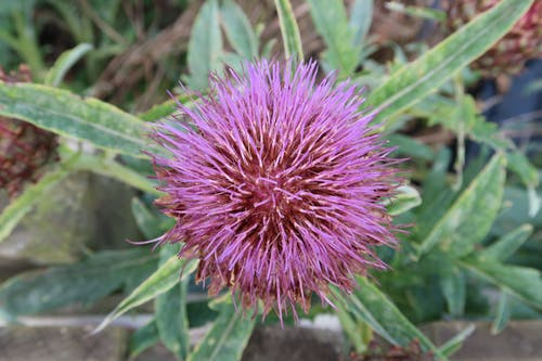 Free stock photo of allotment, allotment garden, Community garden, food plants