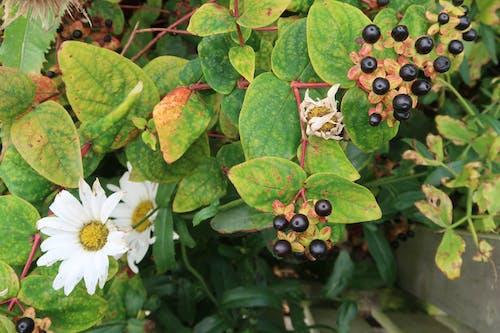Free stock photo of allotment, allotment garden, autumn