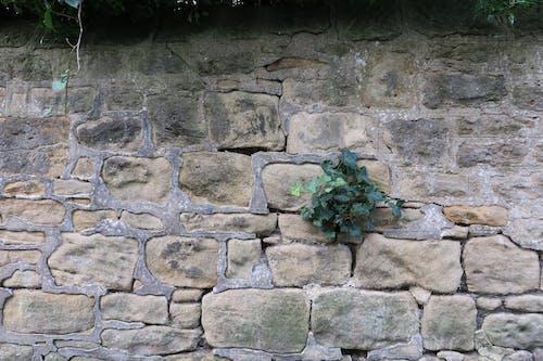 Free stock photo of plant, stone, stone wall
