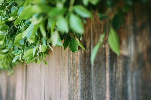 Green Leaves on Brown Wooden Fence