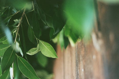 Green Leaves on Brown Wooden Surface