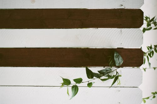 Green Leaves on Brown Wooden Plank