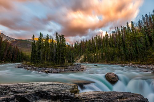 Photos gratuites de Alberta, amalgamar, arbre, arbres