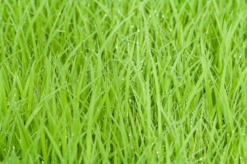 기후, 녹색, 물방울, 방울의 무료 스톡 사진