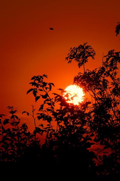 árvoresapagadas, 太陽の輝き, 日の出 - 夜明けの無料の写真素材