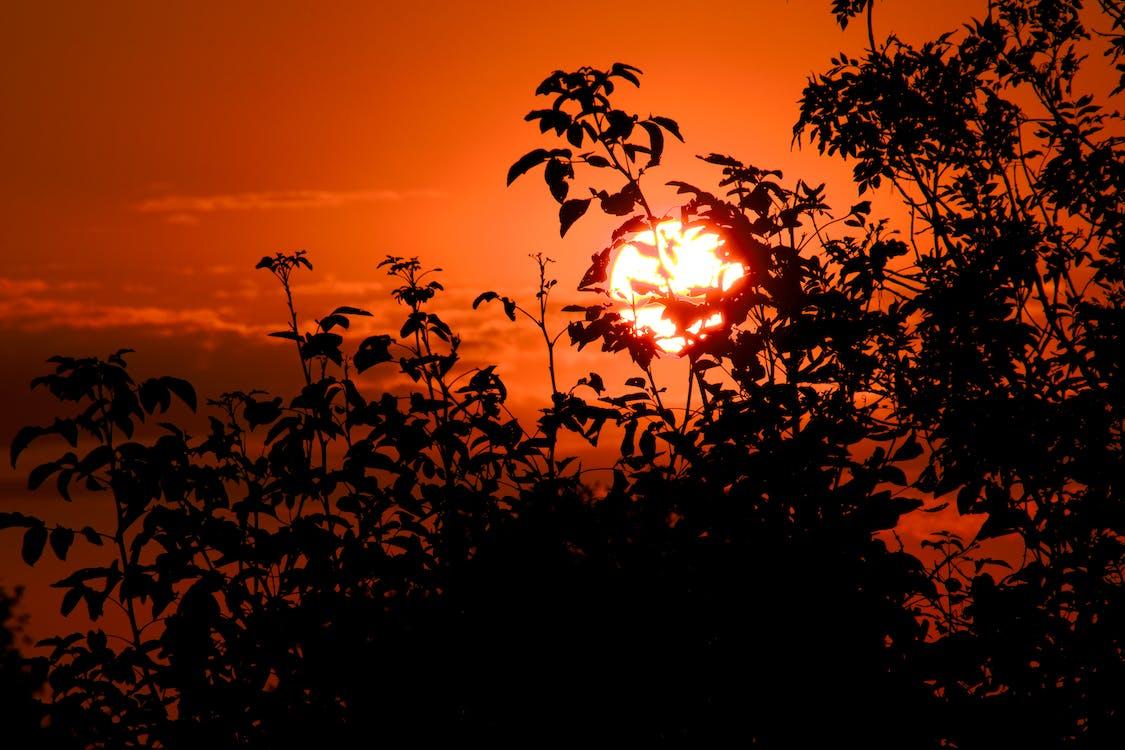 Free stock photo of blackout trees, sun glow, sunrise dawn