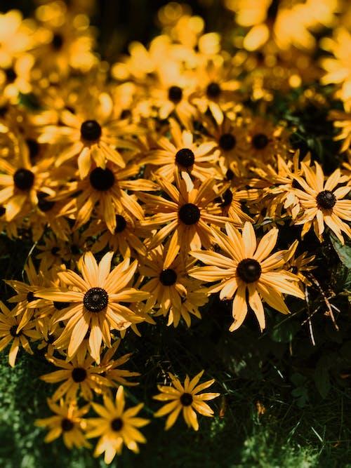 Flores De Color Amarillo Brillante Con Pétalos Delgados