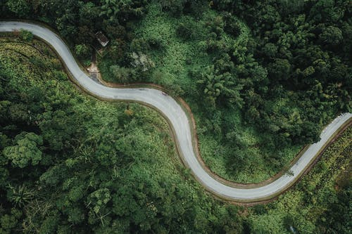 Aerial view of curvy road in lush forest
