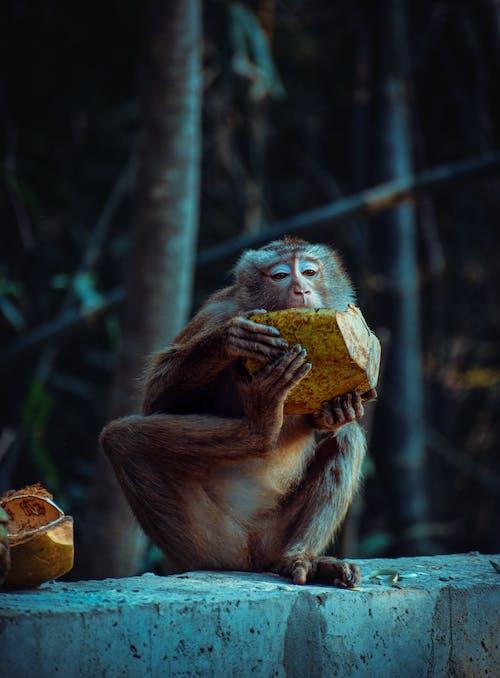 Kostnadsfri bild av apa, bebis, däggdjur, djungel