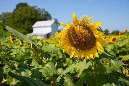 Бесплатное стоковое фото с agbiopix, желтый, лето, лист