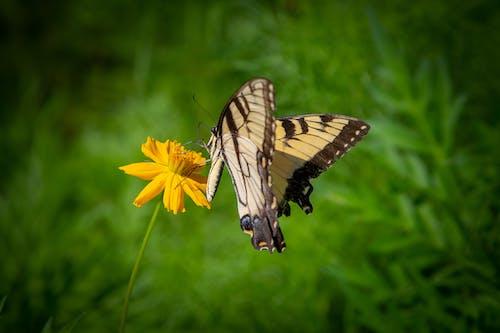 Photos gratuites de agbiopix, fleur, jaune, papillon