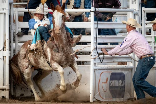 Men Competing in a Rodeo Event