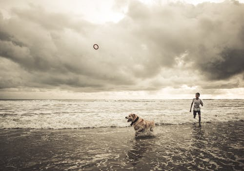 Man and Woman Walking on Beach With Brown Dog