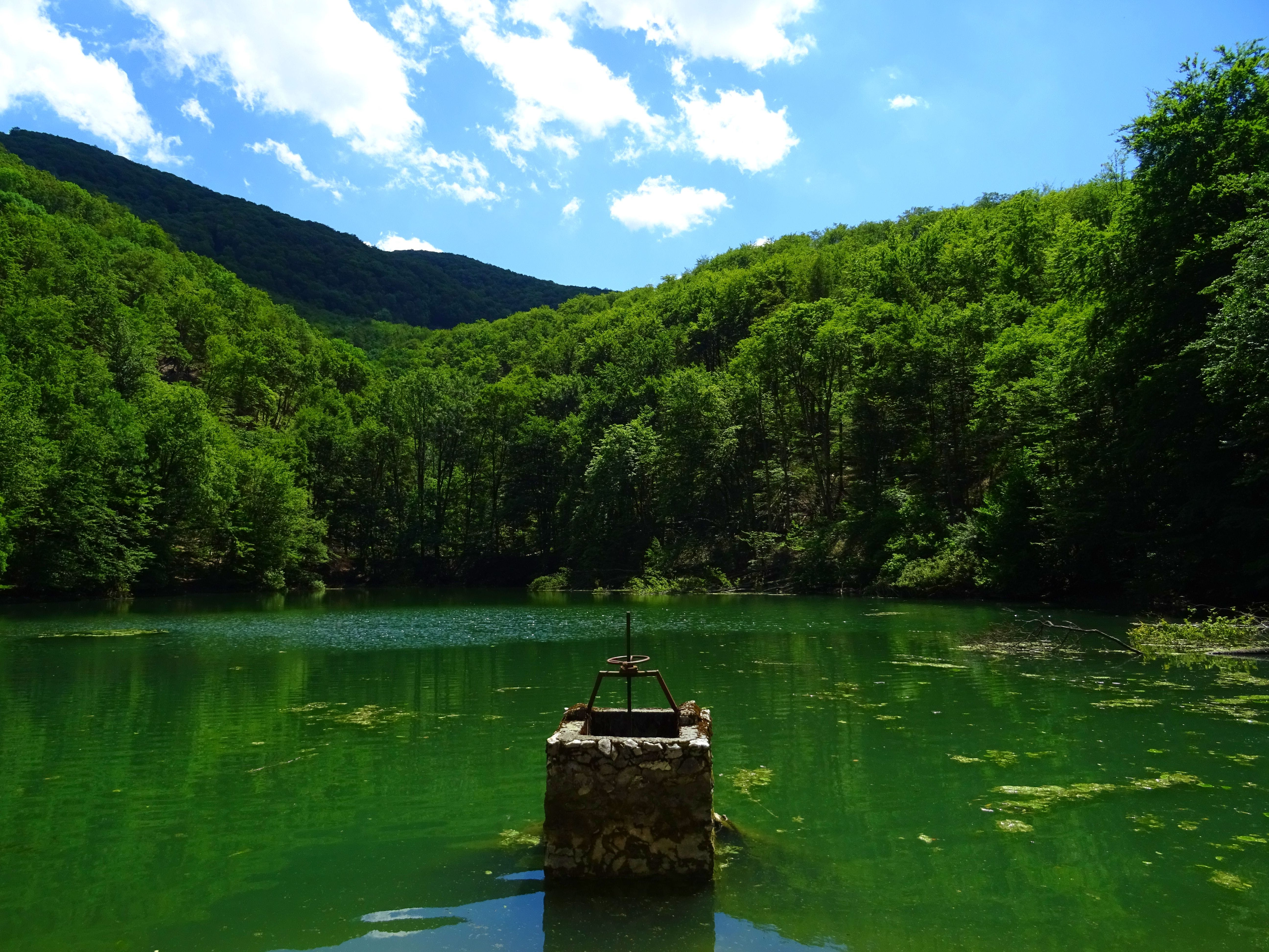 Green Body of Water Surrounded by Green Leafed Trees