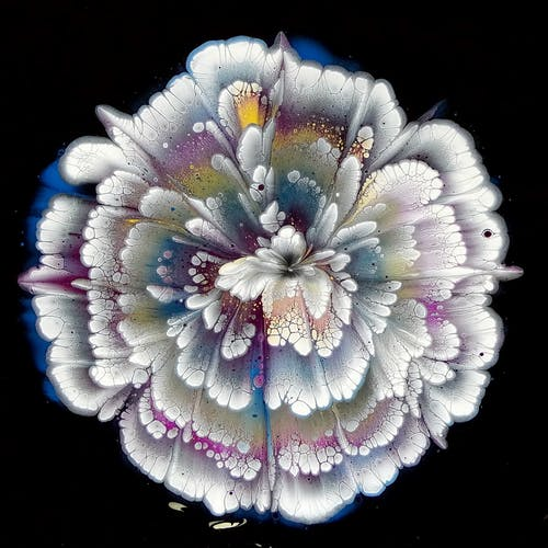 White and Blue Flower in Black Background