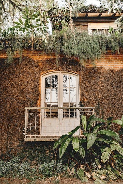 Foto profissional grátis de abandonado, ao ar livre, arquitetura, árvore