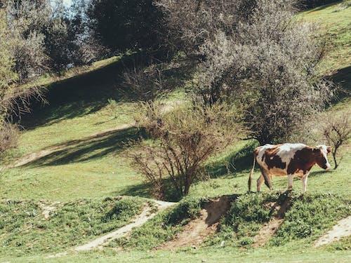 Δωρεάν στοκ φωτογραφιών με arboles, cerro, dia, Montana