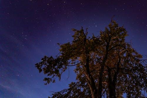 スウェーデン, ダーク, 星, 自然の無料の写真素材