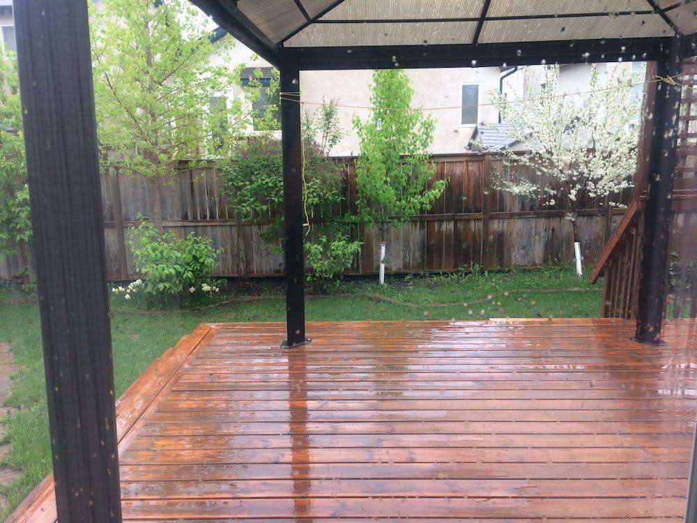 Free stock photo of backyard