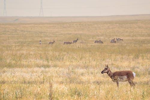 一群動物, 乾的, 側面圖 的 免費圖庫相片