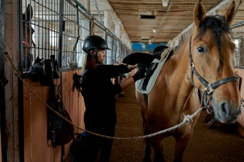 Concentrated young woman fastening horse saddle in stable