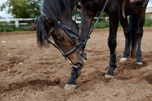 Adorable dark bay horse in paddock