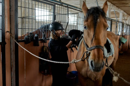 Pensive female in helmet preparing horse for riding and putting saddle on standing in light ranch barn