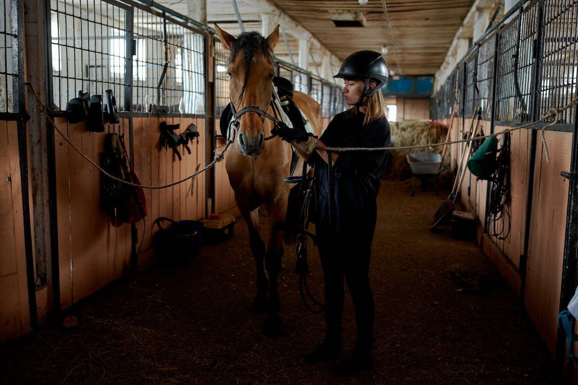 Jonge Vrouw Met Paard In Stal