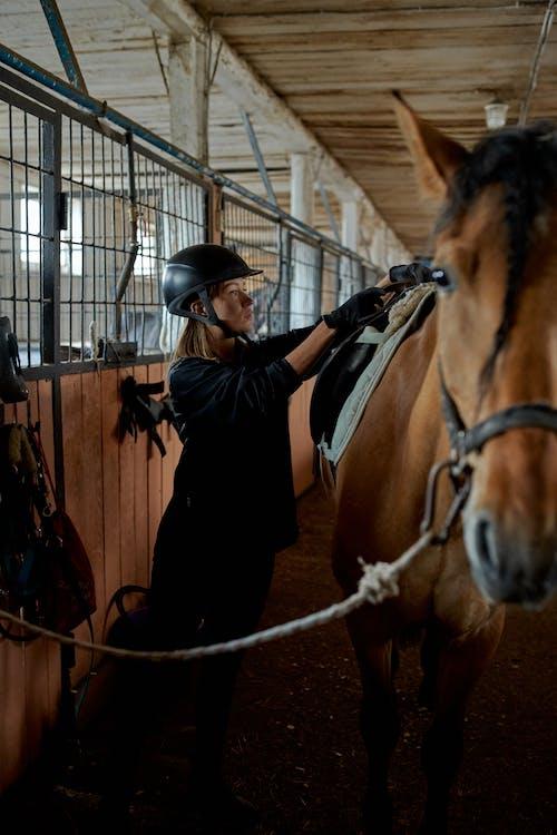 Full body of female equestrian in helmet preparing rein and saddle for dressage chestnut horse