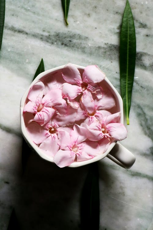 Blooming delicate flowers placed in ceramic cup