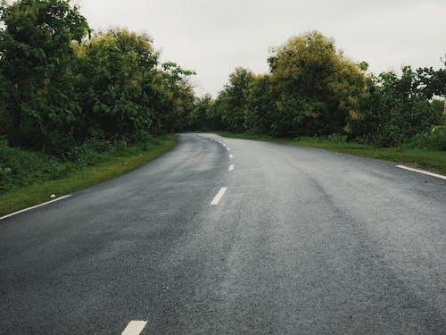 Kostenloses Stock Foto zu asphalt, auto, autobahn, baum