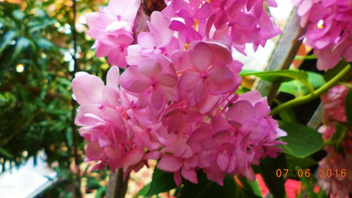 Free stock photo of Anupam Biswas, bunch of flowers, macro photography, pink flower