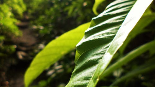 Free stock photo of Anupam Biswas, blurred background, green leaf, green leaves
