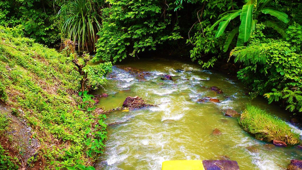 Free stock photo of Anupam Biswas, Green water, greenery