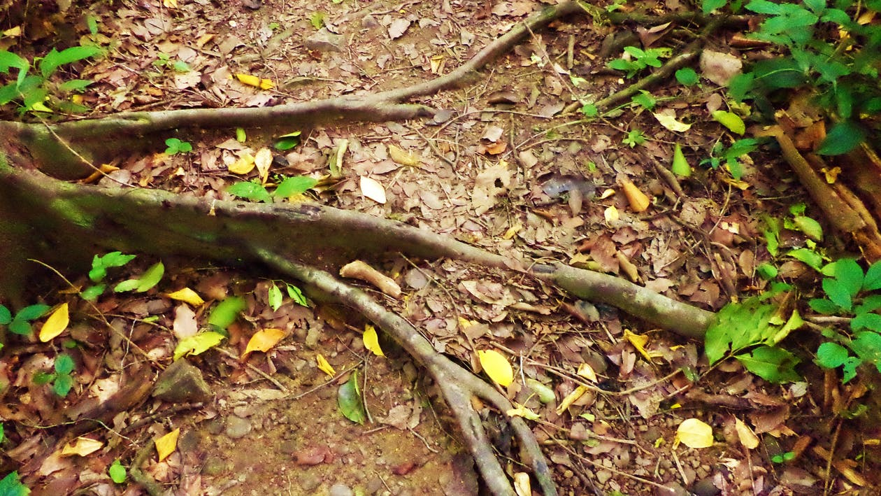 Free stock photo of Anupam Biswas, explorer, fallen trees