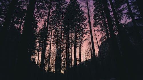 Free stock photo of cedar, Dark Sky, dawn dusk