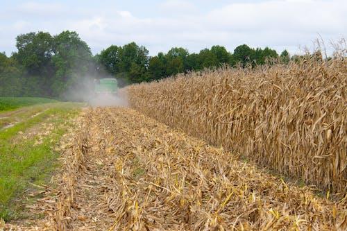 Photos gratuites de agbiopix, agriculture, blé, campagne