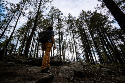 Man Hiking in Forest