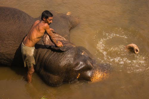 Man in White Shorts Kissing Black Elephant on Water