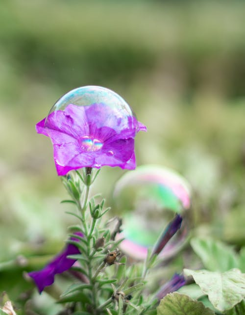 Free stock photo of blowing bubbles, bubble, flower