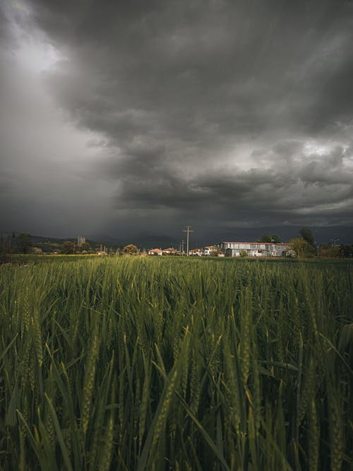 Overcast sky over green field and houses
