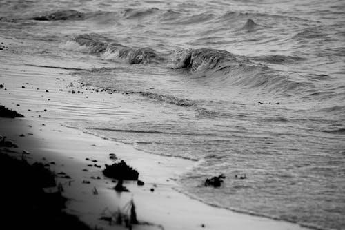 Foto profissional grátis de água, Dinamarca, ondas