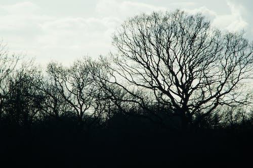 Foto profissional grátis de árvores, conhecimento, natureza, P&B