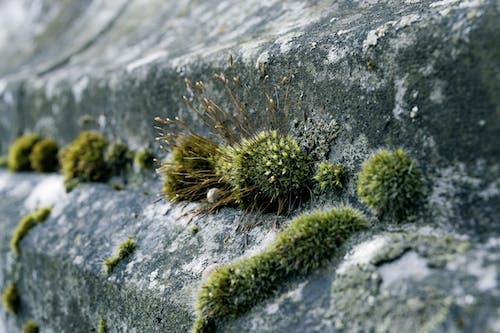 Kostnadsfri bild av betong, betongyta, mossa, natur