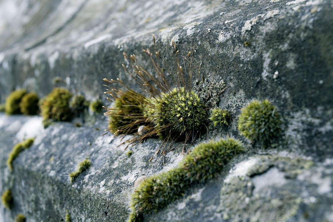 bề mặt bê tông, bê tông, làm vườn