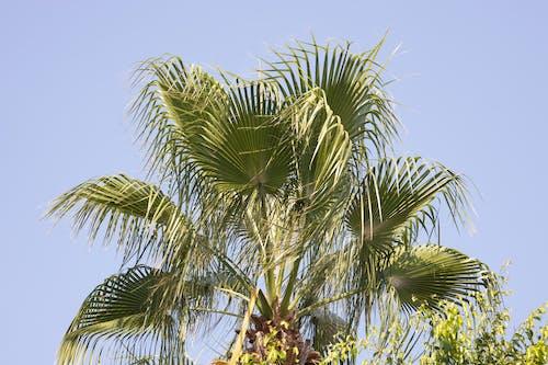 Immagine gratuita di albero, azzurro, bellezza, blu