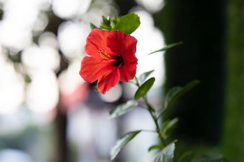 Immagine gratuita di albero, all'aperto, bellezza, bellissimo