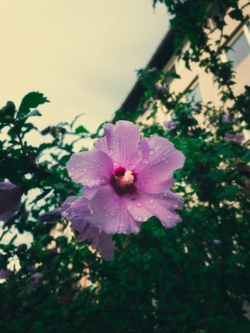 Free stock photo of beautiful, flower, green, pink