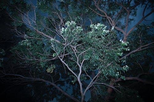 Free stock photo of blue night, nature, storm