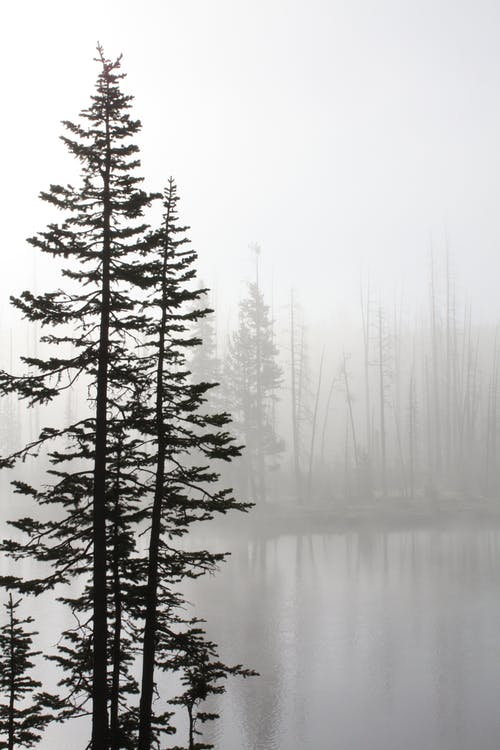 Grayscale Photo oTrees Near Body of Water